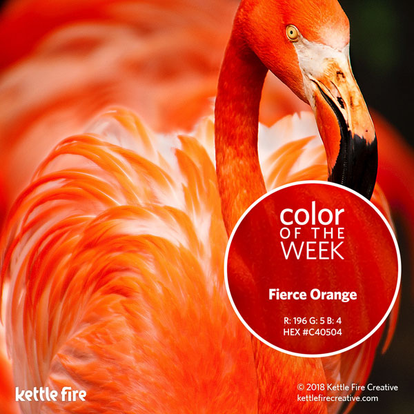 color inspiration, color ideas, colors from nature, RGB codes, HEX codes, Kettle Fire Creative blog, color of the week, fierce orange color inspiration Color Inspiration: 12 Stunning Shades to Spark Your Creativity cotw fierceorange